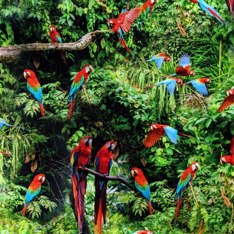 Puuvillatrikotaaž digiprindiga väikesed papagoid