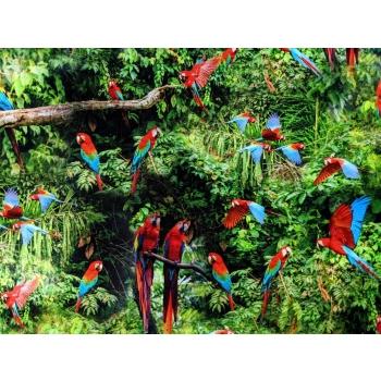 väikesed papagoid_1.jpg