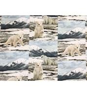 jääkarud.jpg