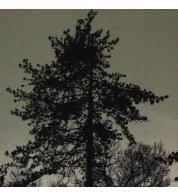 puud kahki.jpg